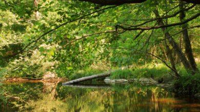 Photo of Резерватът Тисовица